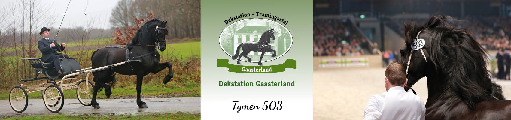 17.079_ Dekstationgaasterland_header-dekhengst Tymen 503