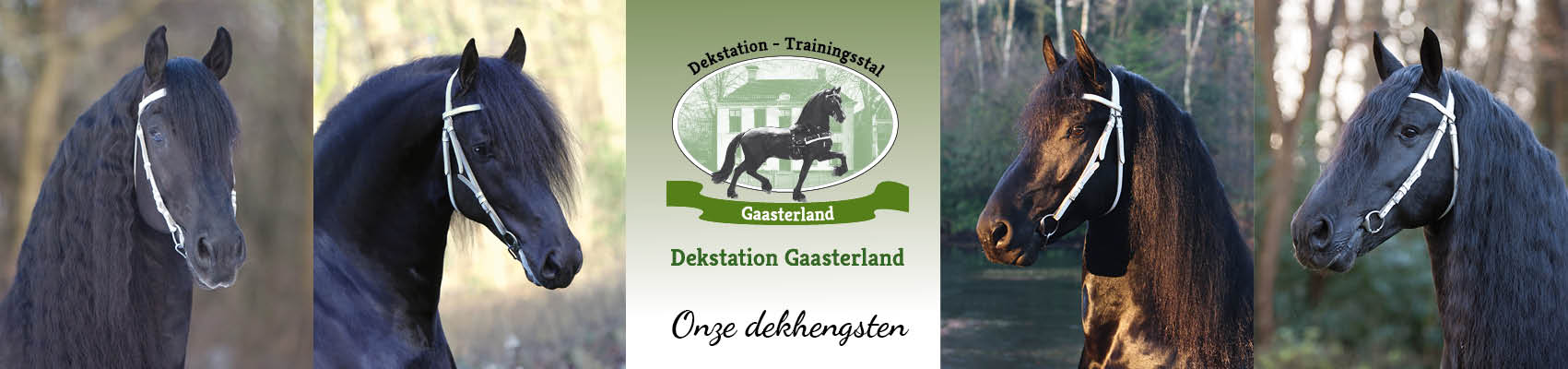 17.079_ Dekstationgaasterland_header-dekhengsten4