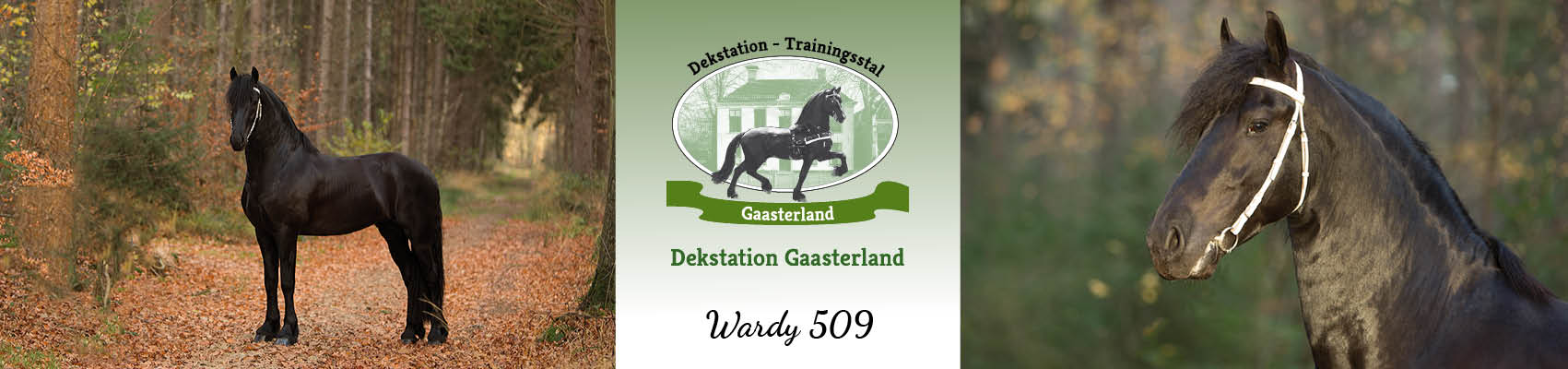 slider-dekstation-wardy